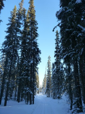One of the best March activities in Fairbanks is cross country skiing. This  is one of the parts of the University of Alaska Fairbanks groomed trail system