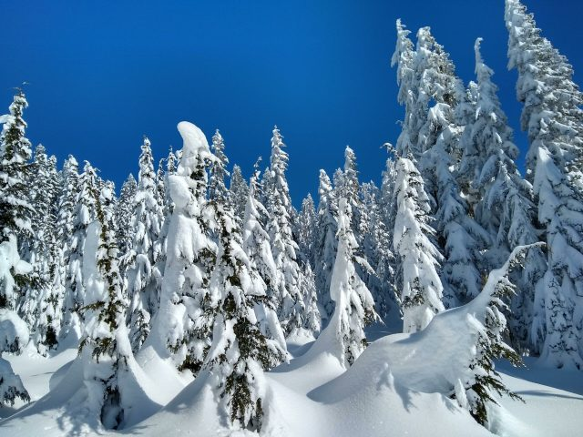 The Skyline Lake Snowshoe trail travels through a winter wonderland of snowy forests. Heavy snow loads the trees most of the winter