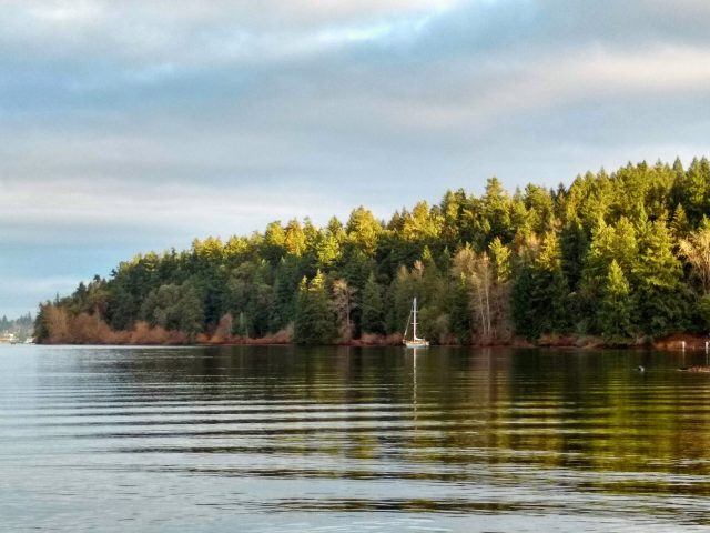 Forested Seward Park in Seattle protects a small bay on one of the most beautiful walks in Seattle