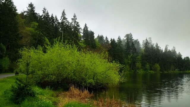 Foggy forests are frequent features of trails in Seattle. A forest at the edge of Lake Washington in Seward park on a foggy spring morning