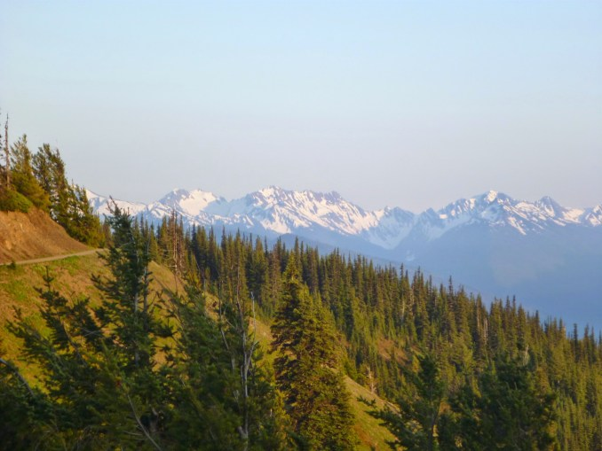 A trail cuts across a tree covered hillside at Hurricane Ridge in Olympic National Park. In the distance there are snow covered mountains.