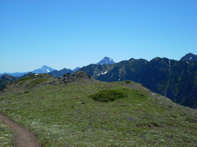 The Mt Townsend trail winds through a rocky meadow with wildflowers with high mountains in the background