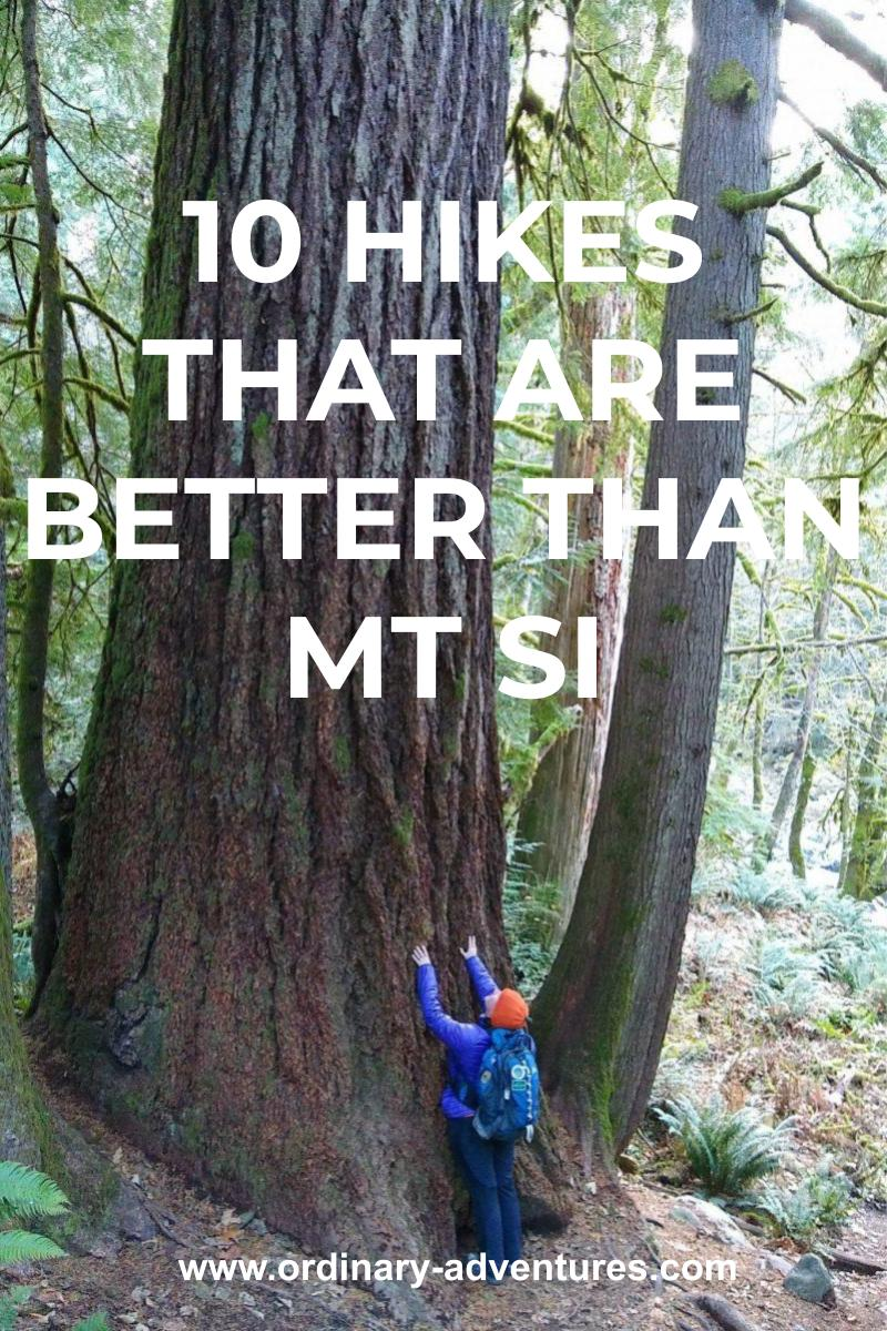 A person with a backpack and an orange hat reaches up against the side of a massive old growth tree that you can only see the bottom of in the photo. Text reads: 10 hikes that are better than Mt Si