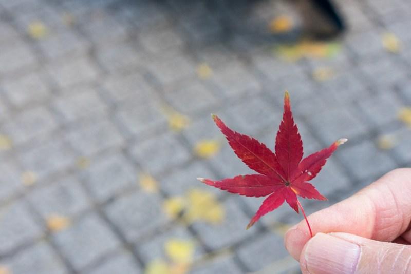 shinjuku gyoen during autumn