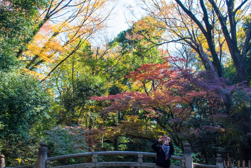 things to do at meiji shrine