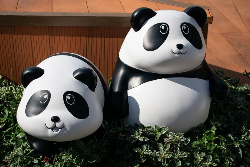 giant panda hong kong