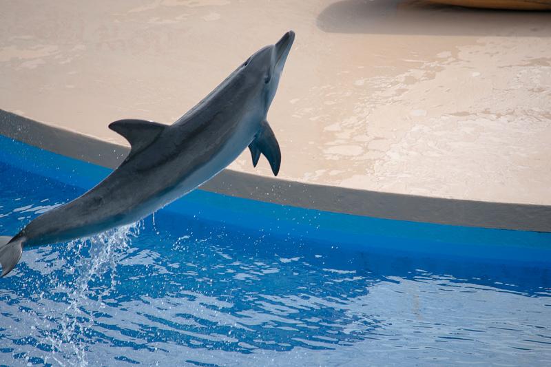 ocean park dolphin show
