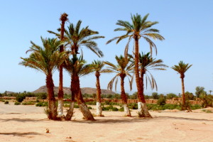SE Moroccan palm trees--it's not the beach, but it's still quite beautiful.