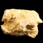 Corynotrypa-_delicatula_250pxB