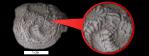 isorophus 800