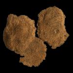 Petigopora 250 black