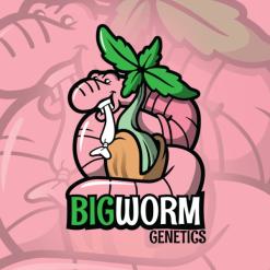 BIG WORM GENETICS