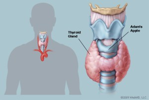 Thyroid Therapy | Oregon Natural Medicine | Portland, OR