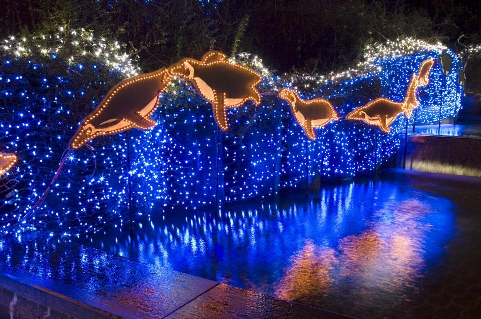 Zoo Lights Portland Oregon