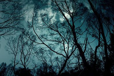 暗い森のイメージ