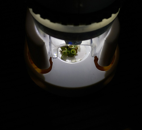 学研 顕微鏡
