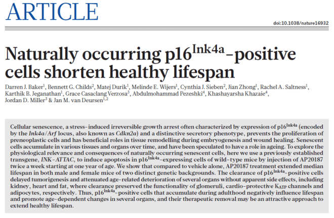 Naturally occurring p16Ink4a-positive cells shorten healthy lifespan