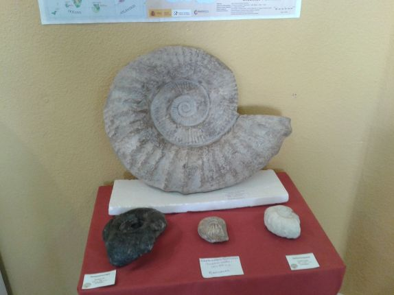 A giant ammonite fossil.