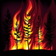 http://www.dreamstime.com/stock-photo-forest-fire-image15541450