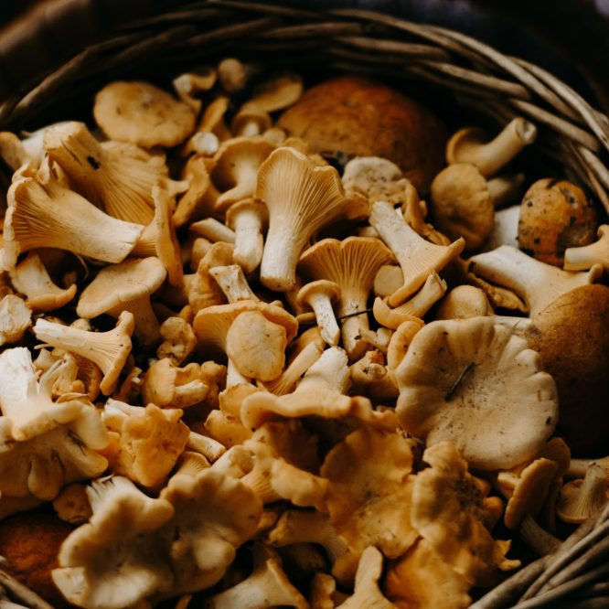 You'll die if you touch those mushrooms – My Grandma