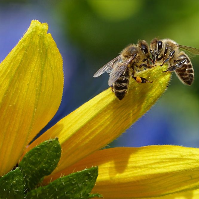 Mushrooms help bees. If you don't know now ya know.