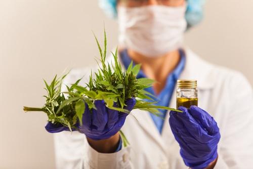 CBD oil from hemp and marijuana