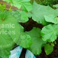 organic fertilizers list