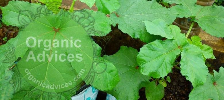 organic fertilizers list