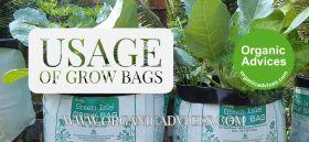 Vegetetabels at Grow Bags