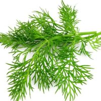 The Health Benefits of Dill