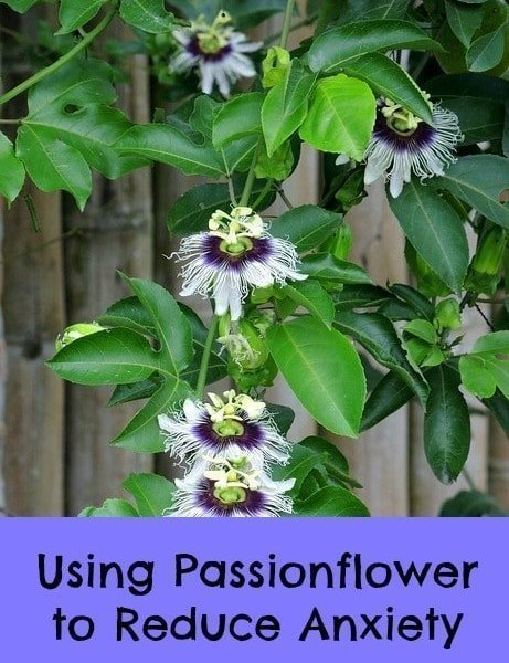 Where to Buy Organic Passionflower