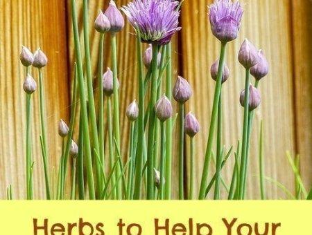 herbal thyroid remedies