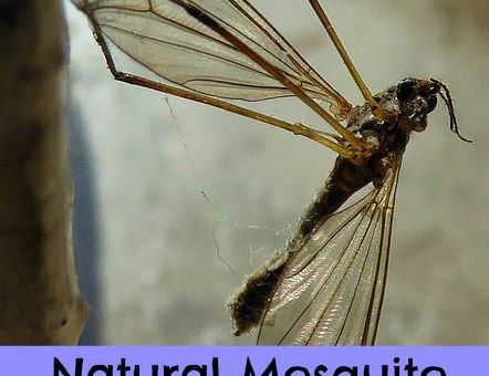 where to buy natural mosquito repellent