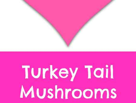 Where to buy turkey tail mushrooms