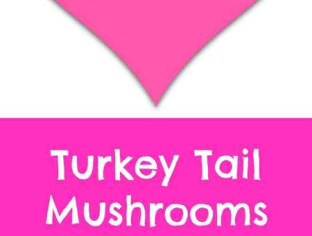 Where to buy turkey tail mushrooms