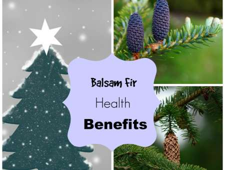 balsam fir oil uses
