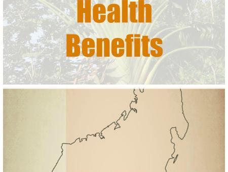 health benefits ravensara essential oil
