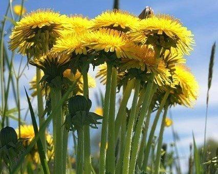herbal medicinal plants their uses