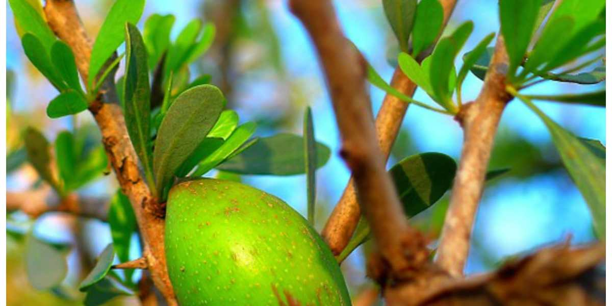 What Does Argan Oil Do For Your Skin?