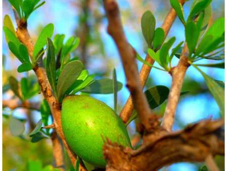 what does argan oil do for your skin