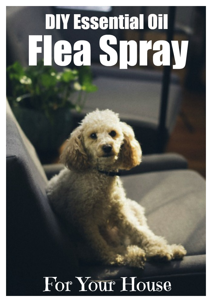 DIY essential oil flea spray for your house