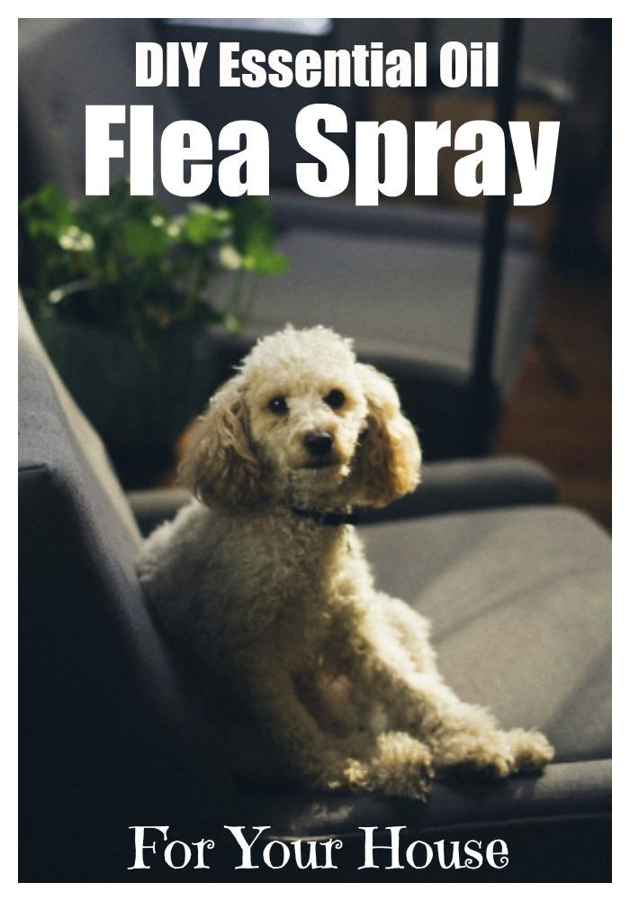 DIY essential oil flea spray for your house