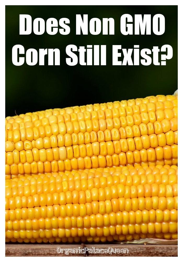 Does non GMO corn exist