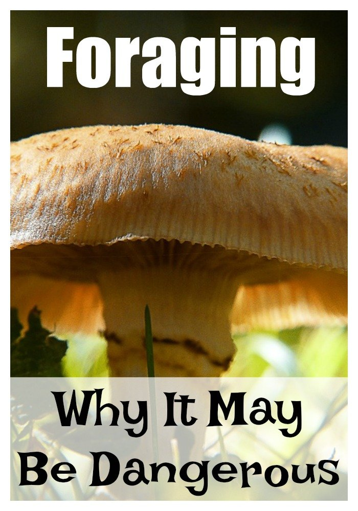 Is foraging for food dangerous