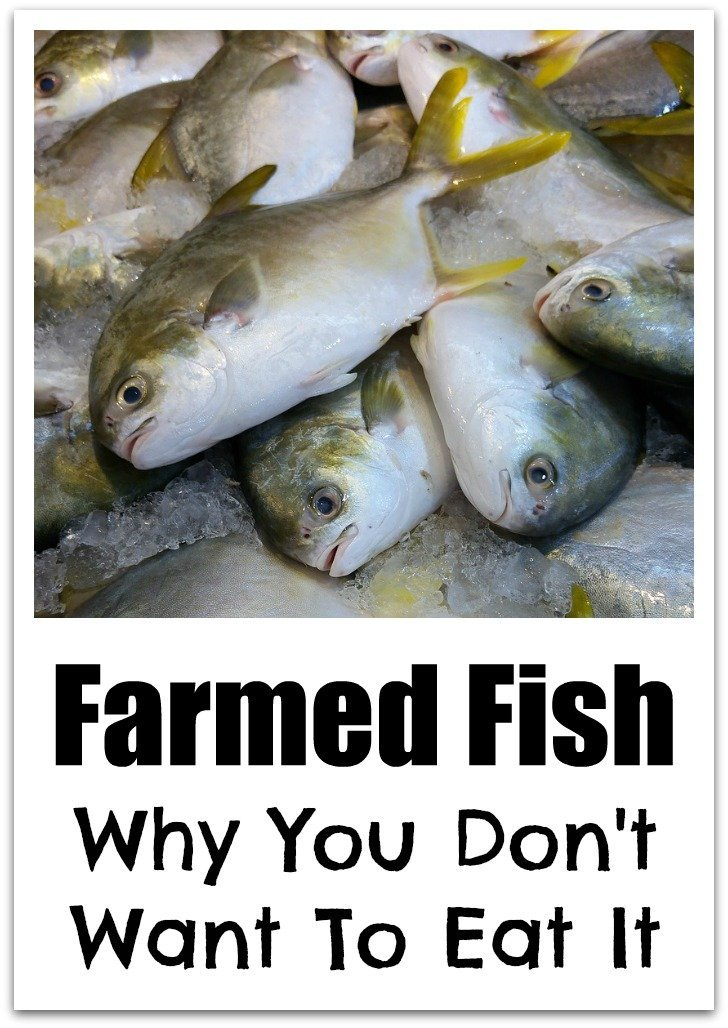 Why you don't want to eat farmed fish