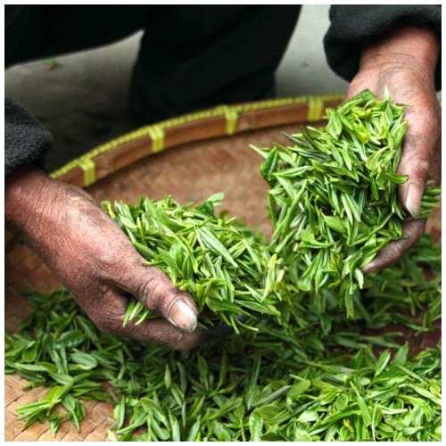 Warning on green tea extract