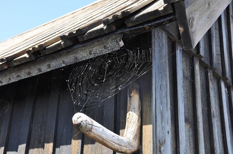 organización organizar casa hogar insectos indeseados hogar casa telarañas