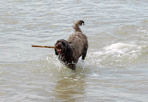 Charlie With His Stick