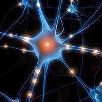quantum consciousness orgone energy