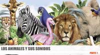 Entretenidovideo para trabajar el aprendizaje de los animales a través de sus sonidos y las letras que los forman, a la vez que vamos viendo sus imágenes al natural. Este […]